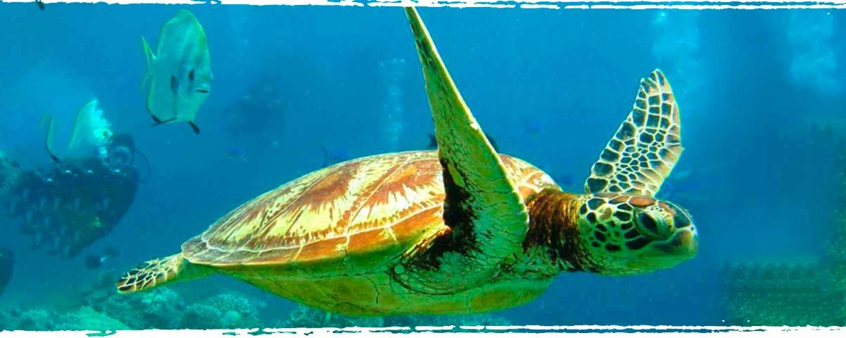 Diving at West Palm Beach - Xperience Florida Marine