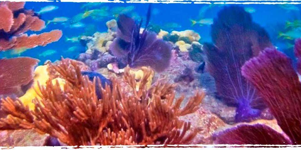Looe Key Reef - Xperience Florida Marine