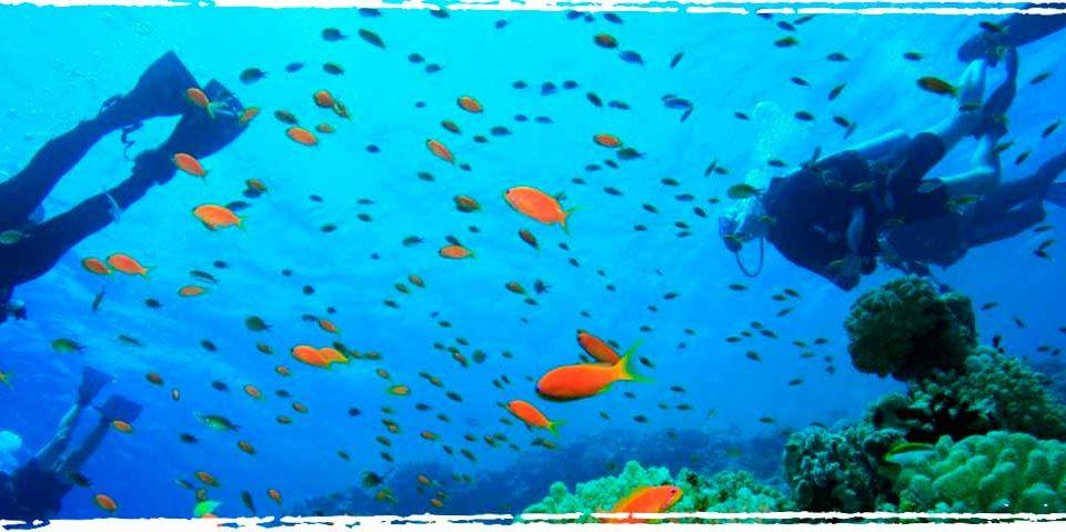 Lynns Reef FL - Xperience Florida Marine
