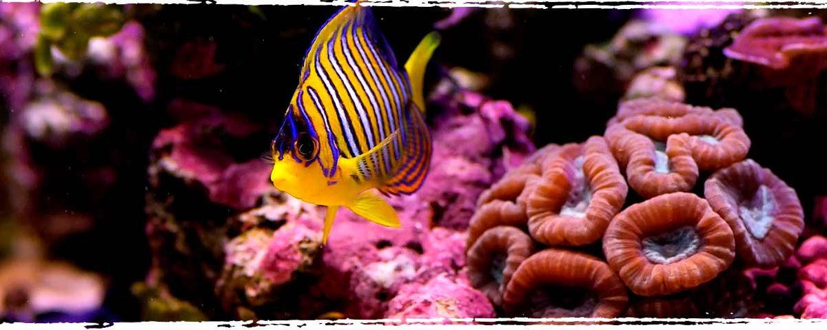 The Florida reef tract - Xperience Florida Marine