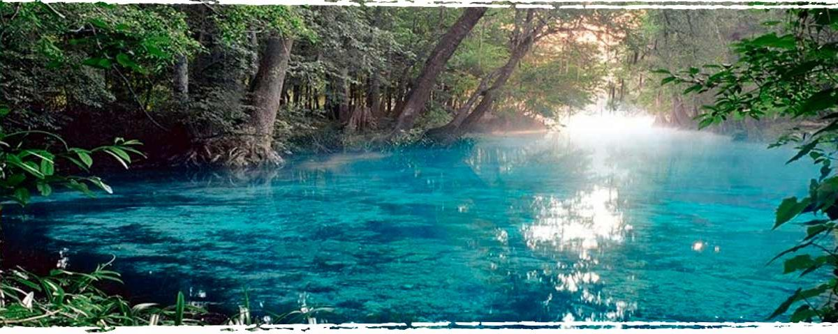 Top Five Unique Diving Destinations on the Florida Coast - Xperience Florida Marine