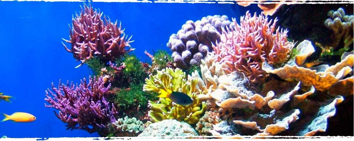 Why Coral Reefs are so important for Floridas marine eco system - Xperience Florida Marine
