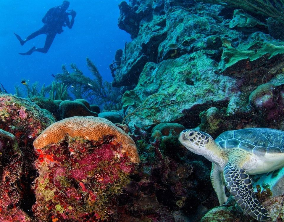 Ocean, corals and turtle - Xperience Florida Marine